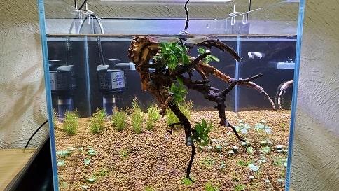 アヌビアスを流木に活着させる方法